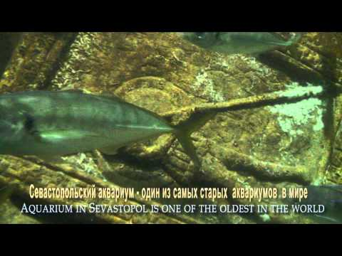 AQUARIUM IN SEVASTOPOL - The oldest aquarium in the world