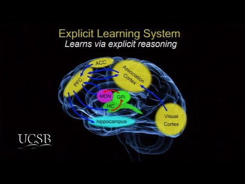 The Remarkable Learning Abilities of the Human Brain