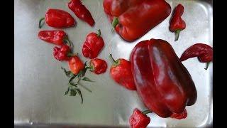 Рецепты соусов: Соус с красным перцем (рецепт)