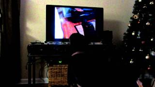 Minnie The Rottweiler Howls At Herself On Tv (how Vain)!