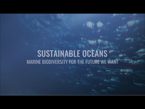 Sustainable Oceans: Marine Biodiversity For The Future We Want