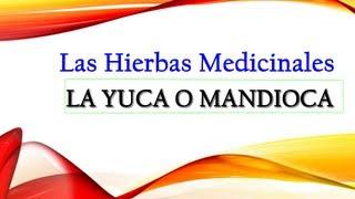 Propiedades De La Yuca ó Mandioca - Propiedades Medicinales y Nutritivas