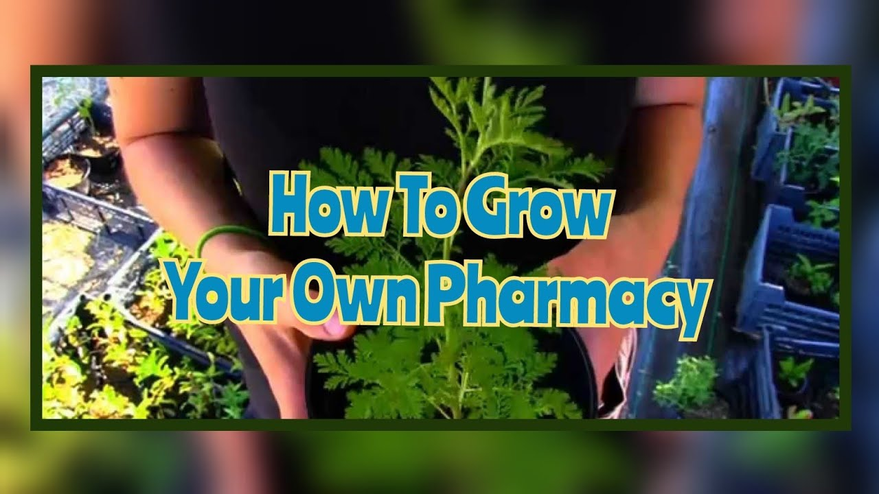 Grow Your Own Pharmacy - An Introduction To Medicinal Plants | Auroras Eye  Films