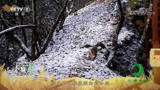 《秘境之眼》 川金丝猴 20201227  CCTV - YouTube