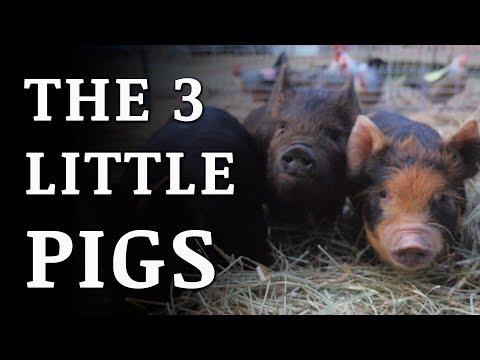 Building a PIG FARM On Our Off Grid Homestead