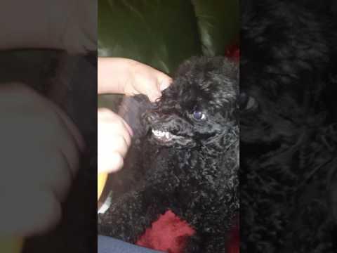 Grooming ( прическа )