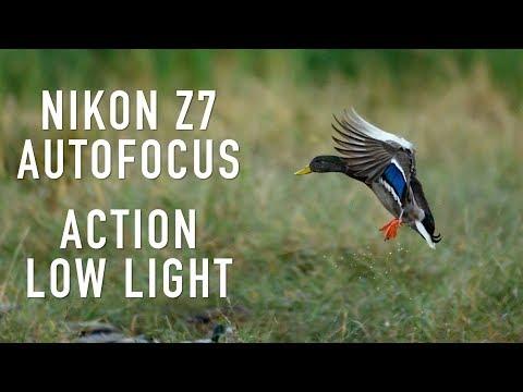 Nikon Z7 Autofocus for Action and Low Light