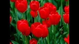 Diwani Diwani [Full Song] (HD) - Aakhri Baazi- Aakhri Baazi