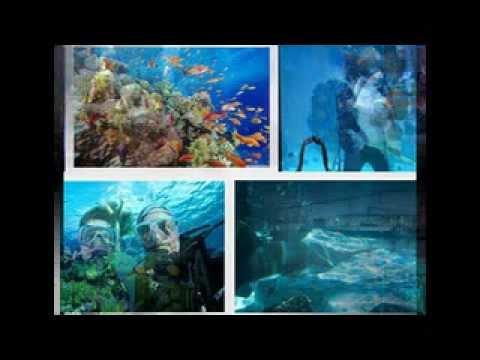Reef HQ Aquarium - Townsville, Queensland, Australia