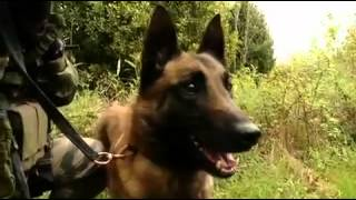 Commando Kieffer - unité spéciale