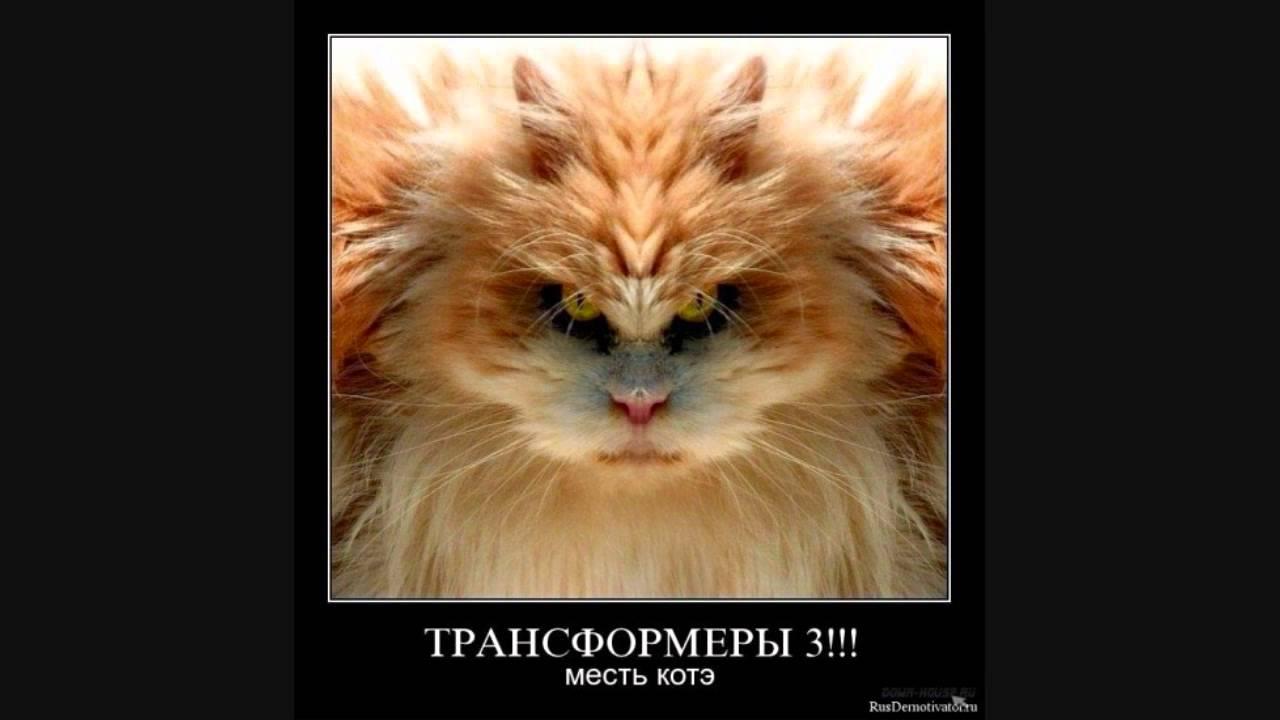 Демотиваторы смешные коте
