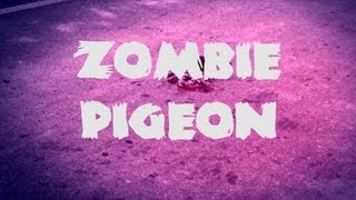 The Zombie Pigeon