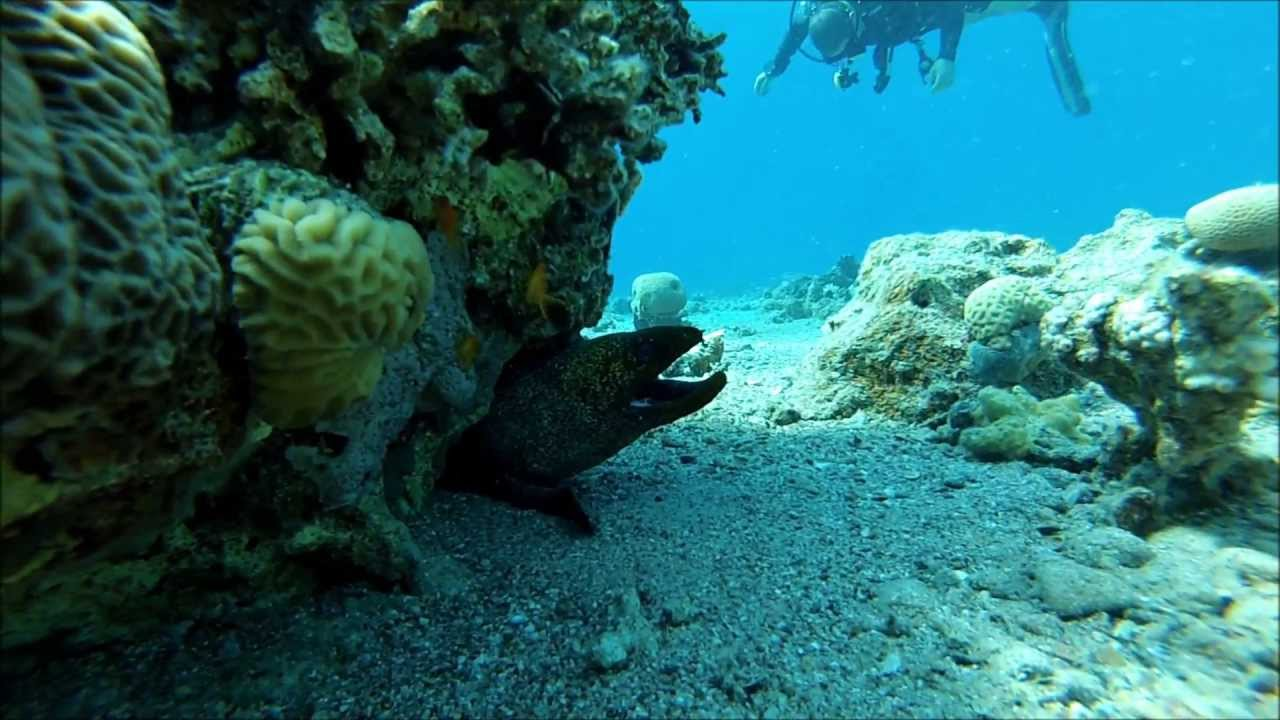 Almog Eilat Apartments Diving In The Red Sea Almog Beach Eilat Youtube