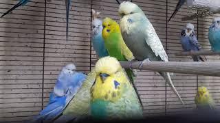 ☕ Пускайте птиц на гнездо когда они хотят этого