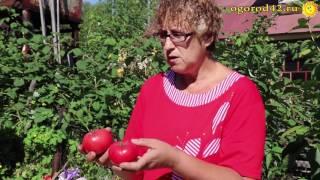 Посол томатов с морковной ботвой
