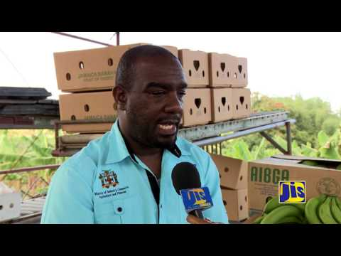 JIS Jamaica Banana Accompanying Measures JBAM Building Capacity for Increased Production and Export