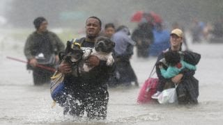 Hurricane Harvey: Animal rescues nationwide rally to help