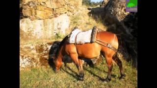 Alojamiento Rural Piedrahita - Barco - Gredos