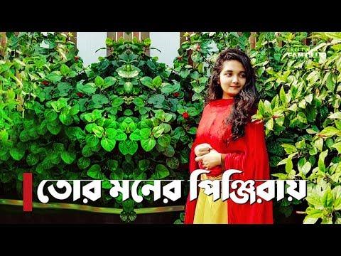 Tor Moner Pinjiray | Female Cover by Purnata | Jisan Khan Shuvo | New Song 2018