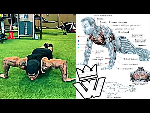 How to do Push Ups WORKOUT: Chest, Shoulders & Triceps