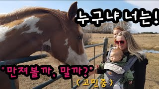 국제커플(Eng Sub) 말을 처음보는 지아의 반응| Gia meets horses for the first time