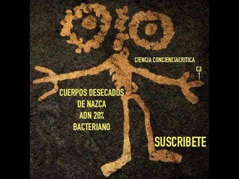 Cuerpos desecados Nazca y Palpa ADN 20 %Bacteriano /CienciaConcienciaCritica  C3