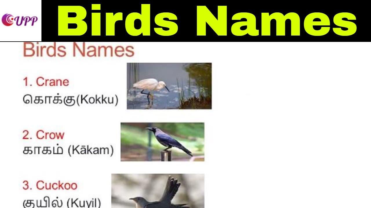 Learn Tamil Through English- birds Names