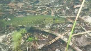 Der Glambeck   Schnorcheln in der Uckermark