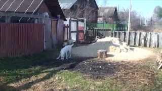 доска объявлений собаки(, 2010-06-25T03:18:19.000Z)