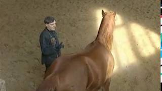 Рыжая лошадь Когда поиграет Судьба гения Дурацкое имя Феномен мудрости Мир тьмы Мечты негодяя
