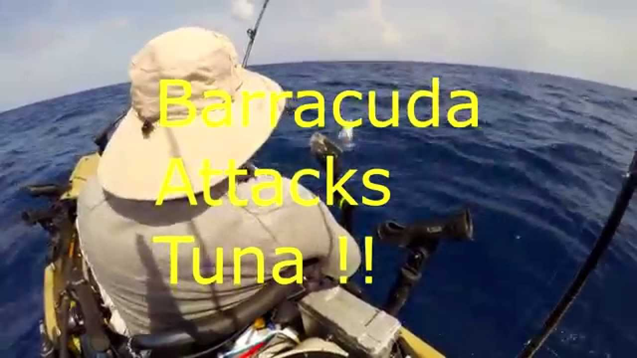 Cuda Attack - YouTube