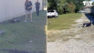 Pig Evades Animal Control Sending Officer Face First Into Dirt