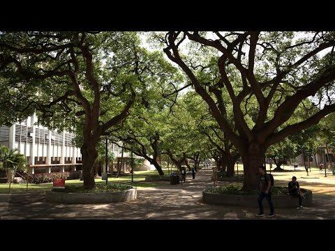 UH Manoa campus an accredited arboretum