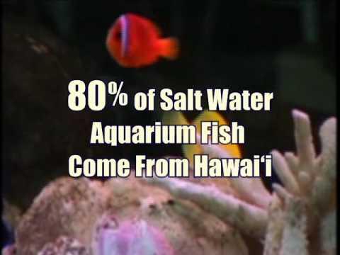 Impacts of Aquarium Trade in Hawaii