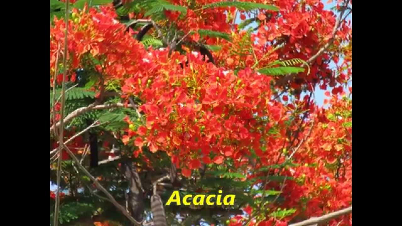 Plantas y flores encontrados en guerrero mexico youtube for Arboles plantas y flores