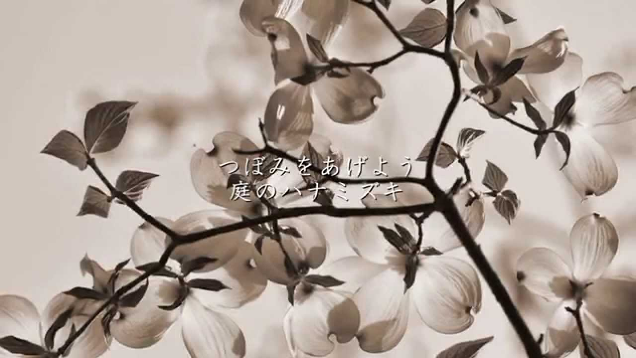 画像 ハナミズキ ハナミズキ(花水木)