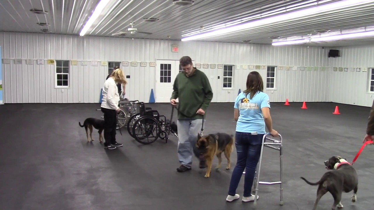 AKC Canine Good Citizen & Therapy Dog International Group ...
