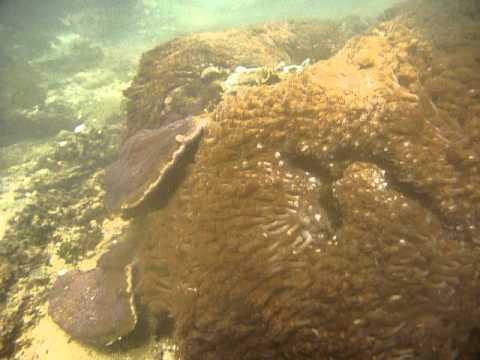 Sri Lanka,ශ්රී ලංකා,Ceylon,Coral Reef (17)