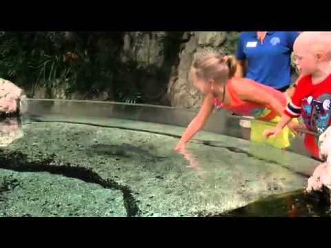 Tennessee Aquarium's $100 Million Economic Imp