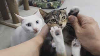 17고양이들과 집사의 아침 일상 2021/08/02