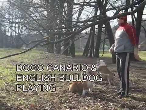 Film 0001 DOGO ÉS ANGOL