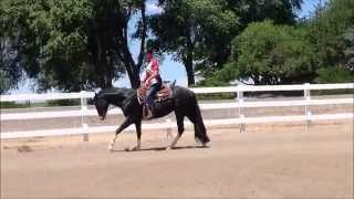 FOR SALE: EPR DRUM ROLL PLEASE 2yr old ATF black filly