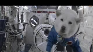 тест на психику кто засмеетса лайк и подписка собака в космосе