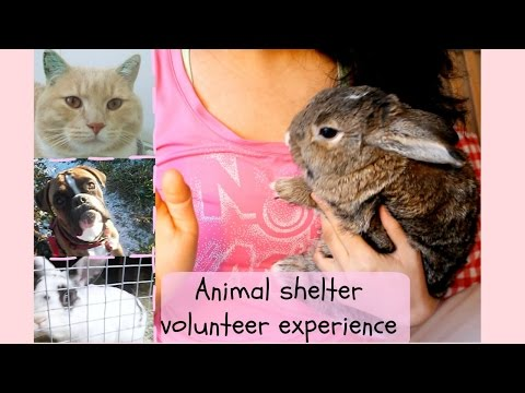 My experience volunteering at an animal shelter + footage