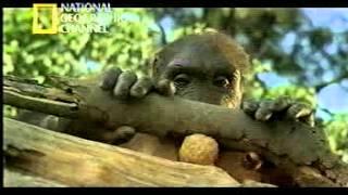 El Hombre Mono  En Busca del Primer Humano  Evolución del Hombre
