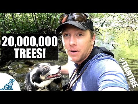 Hiking With Our Dogs Through 20,000,000 Trees! - #TEAMTREES