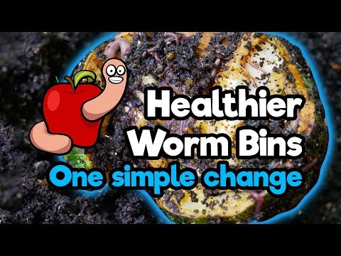 Changing The Way I Feed My Worms, Great Results! Worm Bins Update August 2018
