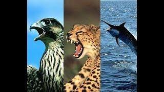 أسرع حيوان على سطح الأرض – لم أكن أعلم