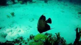 #4259, Buceando en arrecife pez disco negro con amarillo [Efectos], Buceo y mar