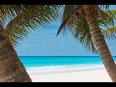 Bruit Des Vagues Pour se Détendre Et Dormir ♒ Belle Plage Sauvage Hawaïenne 🎧 Thérapie Par Les Sons